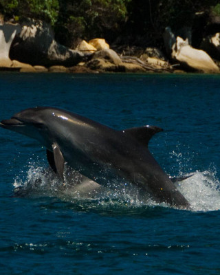 Dolphin Fun - Cathedral Cove Scenic Cruises
